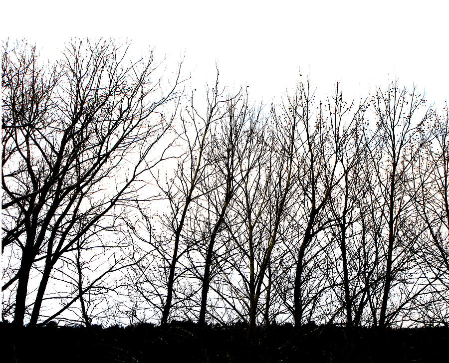 winter-tree-line-in-black-and-white-ann-powell